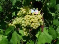 Алешенькин урожай 2009 г