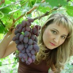 "Гроздь винограда сорта ""Ризамат"""