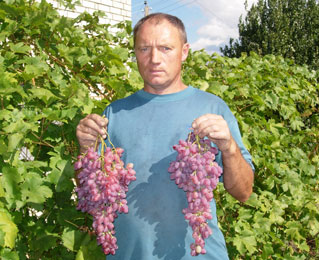 Я с гроздями Винограда сорта Кишмиш Лучистый 4 сентября 2005 года