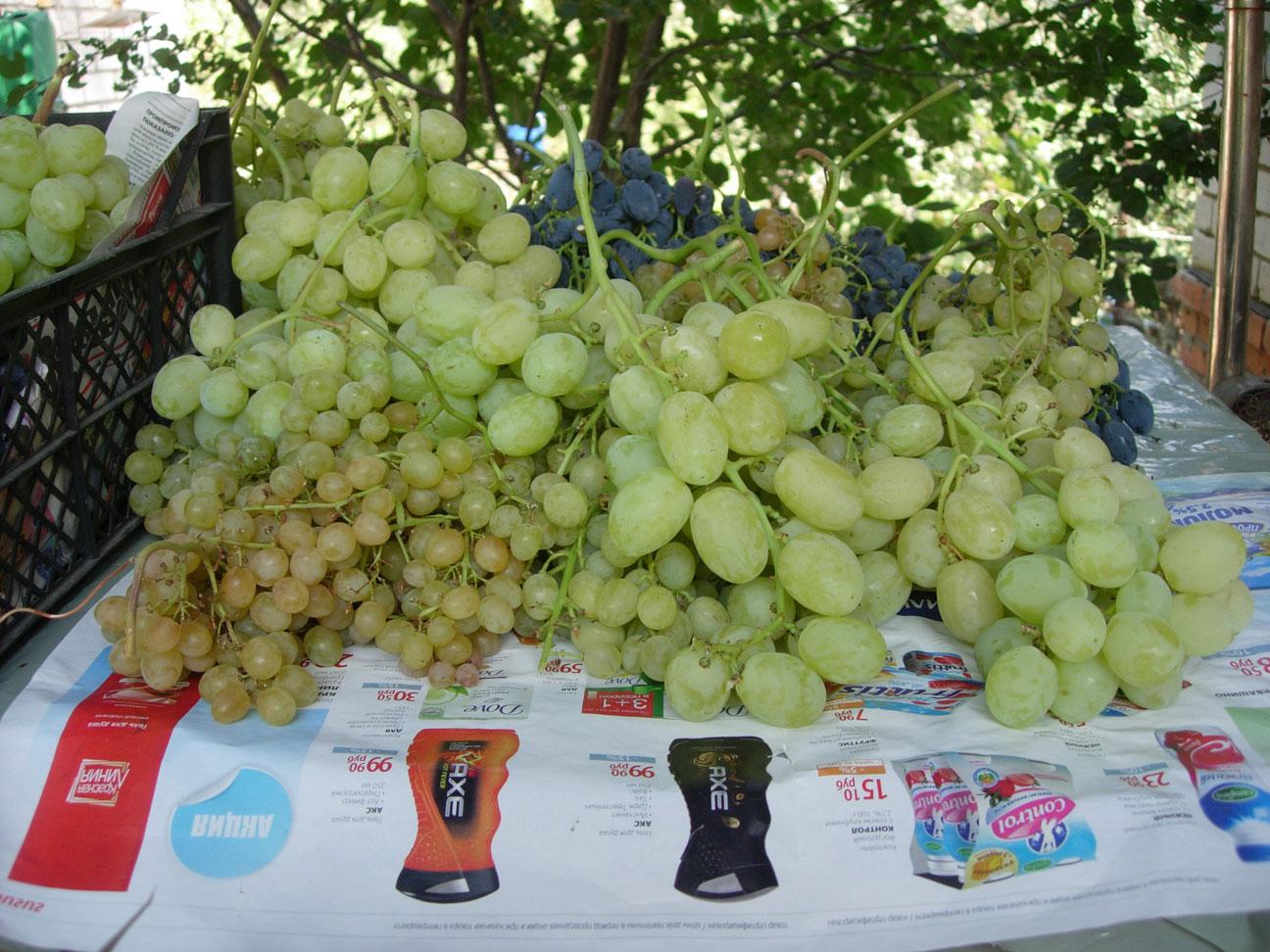 Описание винограда подарок запорожью 704