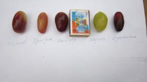 Размер ягод для сравнения.