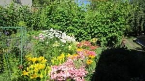 IКуст Золушки на фоне цветов.