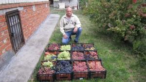 Я  и виноград.