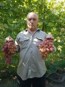 грозди Преображения.